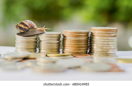 Brown snail climbing the pile of coins on white background ,Business and finance ,Victory and success from patience ,Slow economic growth