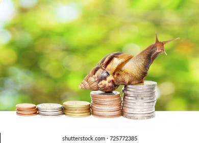 Brown snail climbing  the pile of coins with natural green and Bokeh  background  , Financial and commit business concept , Victory and success from patience ,Slow economic growth