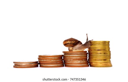 Brown snail climbing the pile of coins on white background ,Business and finance ,Victory and success from patience ,Slow economic growth ,Four - pile coins in a graph pattern soared