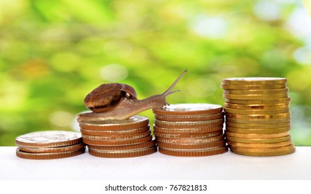 Brown snail climbing  the pile of coins with natural green and Bokeh  background  , Financial with development and commit business concept , Victory and success from patience , Slow economic growth