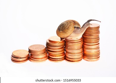 Brown snail climbing  the pile of copper coins on white background , Financial with development and commit business concept , Victory and success from patience , Slow economic growth