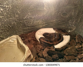 A brown snake removes skin and changes it to a new one at the zoo.