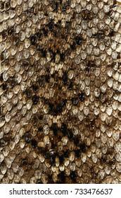 brown snake skin texture