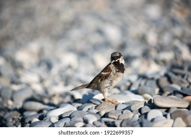 brown sparrow with bread crumbs