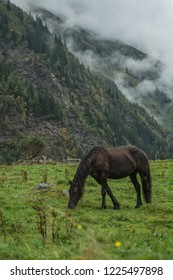 Brown stallion in Austrian Alps
