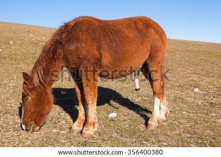 big stallion cock black ebony porn site
