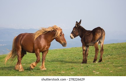 Brown stallion and donkey on the mountain