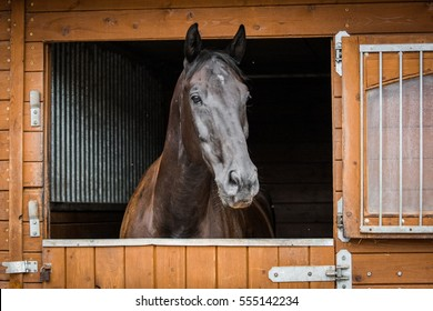 Brown stallion head looking out of his stable