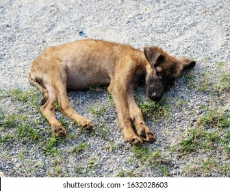 brown stray dog sadly abandoned in the street. Sad and malnourished puppy