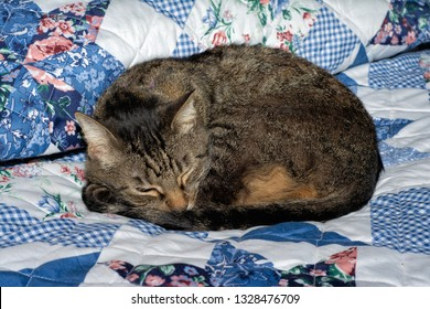 Brown tabby cat curled up and asleep on a bed