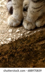 Brown tabby cat, paw close-up. Selective focus.
