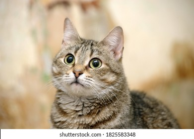 brown tabby cat portrait, cat in the shelter