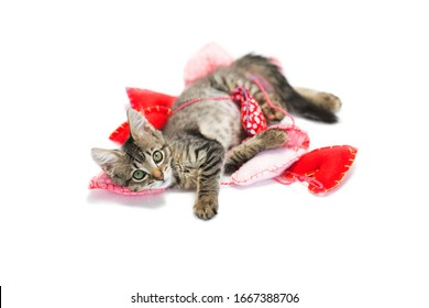 Brown tabby kitten playing in string heart garland on white  background