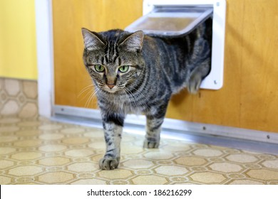 Brown tabby uses cat door to go in and out