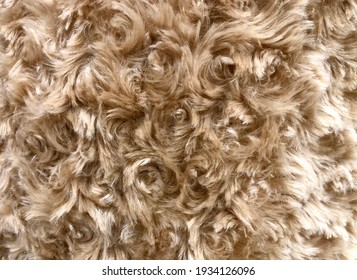 Brown Tan Bear Spiral Curly Fur textured background