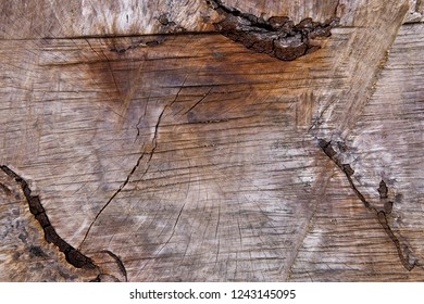 brown timber wood log texture background wallpaper backdrop