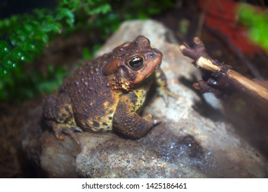 brown toad wildlife environment forest frog nature