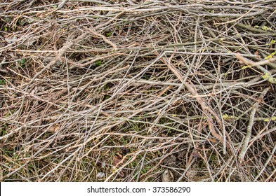 brown tree branch. Dry branch. Dead branches. tree branch of  big tree,  nature background. dry wood branch on ground. cut branches of fruit trees on the ground in the garden