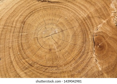 brown tree ring of trunk