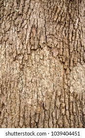 The brown tree skin texture
