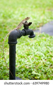 Brown tropical lizard, looks like a dragon, sits on water pipe. Blured green background