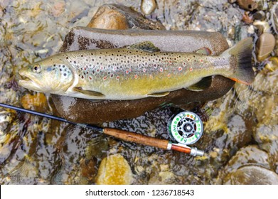 brown trout caught by fly fishing