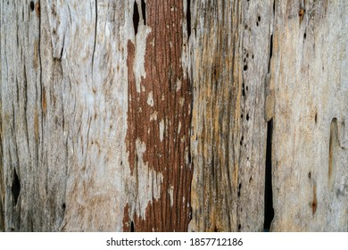 Brown vinatage wood texture art background abstract wood