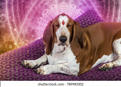 brown and white basset hound meditating and squatting with eyes closed in yoga in a psychedelic room