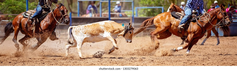 A brown and white calf being lassoed in a team calf roping event at a dusty country rodeo
