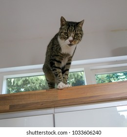 Brown and white cat looking down curiously - Cute kitten standing on shelf indoors