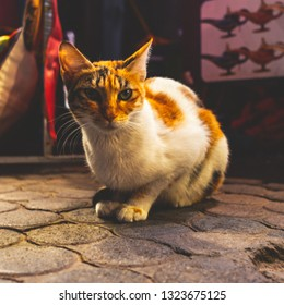 A brown and white cat sitting on cobble stone at a market
