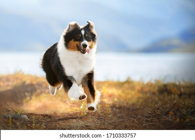 A brown and white dog standing in the grass. High quality photo
