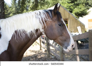 Brown and White Horse in Corral
