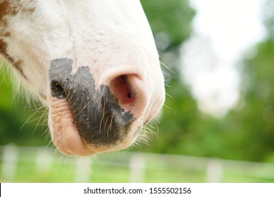 Brown white horse nose close up.