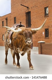 Brown and white longhorn bull walking down the street in front of a brick building.