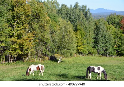 Brown and white young horses in field