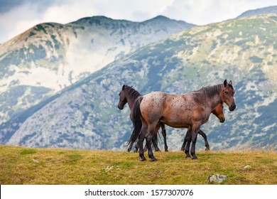 Brown wild horses roaming free in the mountains in summer - Shutterstock ID 1577307076