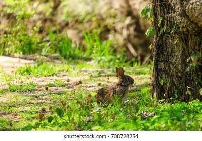 Brown Wild Rabbit by Tree in Spring