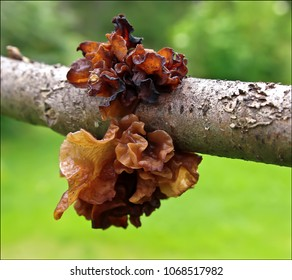 brown witch's butter
