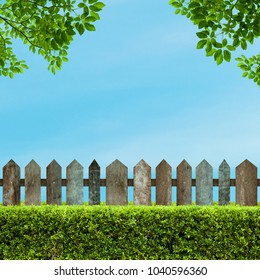 Brown wooden fence and Green bush wall with a blue sky background in the park