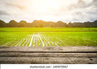 Brown wooden table board empty on Beautiful Organic green paddy-field