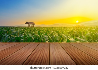 brown wooden terrace on cornfield and farmer hut in agricultural garden with light shines sunset