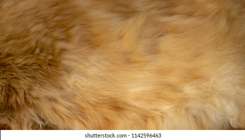 Brown wool texture background