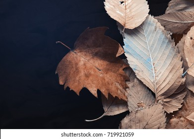 Brown,blue autumn leaves on dark background, top view with cold instagram filter.Fake color