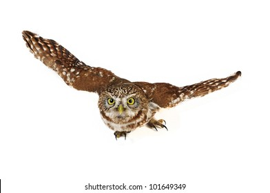 brownie  horned owl on a white background