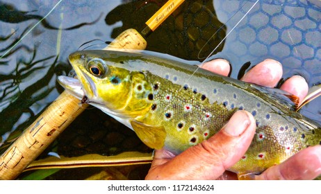 Browntrout and splitcane