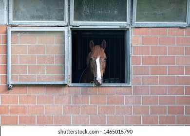 brown-white horse in a horsebox that looks out of a window with exposed masonry