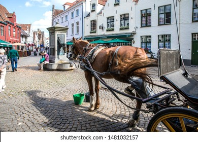 BRUGE, BELGIUM, SEPTEMBER 2018.  Tour of the center of Bruges in a horse-drawn carriage. The carriage stopped at the horse head fountain, in order to rest and drink.
