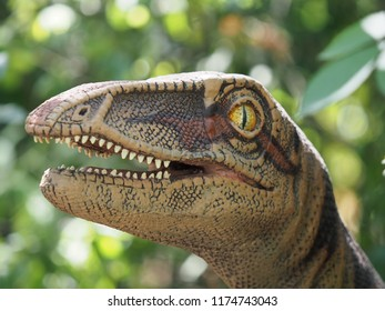 Brugelette, Belgium - August 2, 2018: A replica of a Coelophysis.