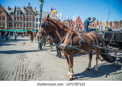 Bruges, Belgium, 23/06/2019in the market square with blinders blinkers on tourism in Belgium bruges europe european western horse for transportation and entertainment of tourists animal cruelty